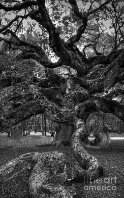 Angel Island State Park Photograph - Angel Oak Tree 2 by Kathleen Struckle
