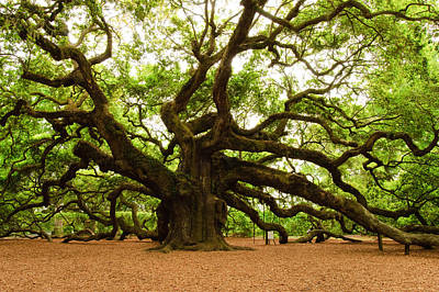 Sacred Digital Art - Angel Oak Tree 2009 by Louis Dallara