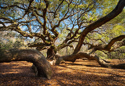 Soothing Photograph - Angel Oak Tree Charleston Sc by Dave Allen