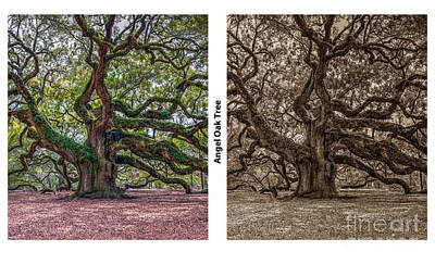 Photograph - Angel Oak Tree Double by Dale Powell