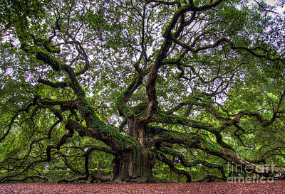 Angel Oak Tree Art Print by Douglas Stucky