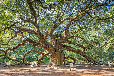 Photograph - Angel Oak Tree In Charleston Sc by Pierre Leclerc Photography
