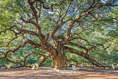 Angel Oak Tree In Charleston Sc Art Print by Pierre Leclerc Photography