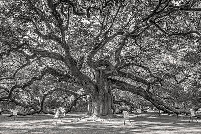 Photograph - Angel Oak Tree In Sepia by Pierre Leclerc Photography