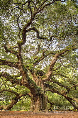 Large Oak Tree Photograph - Angel Oak Tree Johns Island Sc by Dustin K Ryan