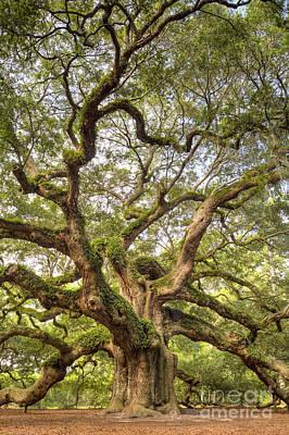 Awesome Photograph - Angel Oak Tree Johns Island Sc by Dustin K Ryan