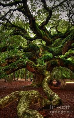 Kathleen Photograph - Angel Oak Tree by Kathleen Struckle