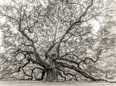 Photograph - Angel Oak Tree by Kathy Ponce