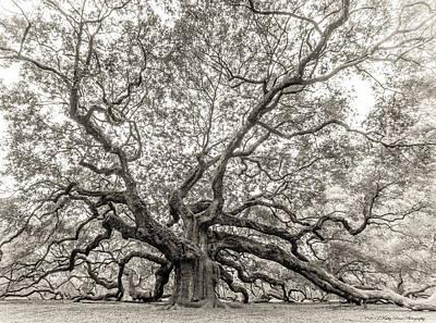 Angel Oak Tree Art Print by Kathy Ponce