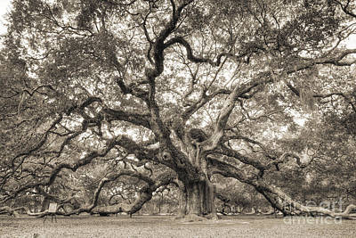 Oak Trees Photograph - Angel Oak Tree Of Life Sepia by Dustin K Ryan