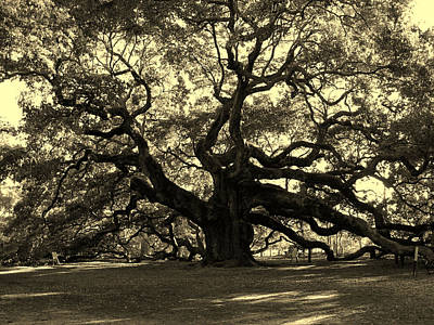 Angel Oak Tree Sepia Art Print by Susanne Van Hulst
