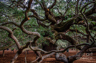 Photograph - Angel Oak Tree Treasure by Dale Powell