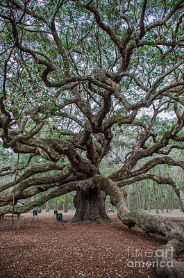 Photograph - Angel Oak Vertical by Dale Powell