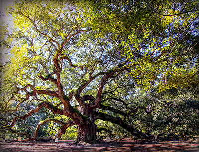 Live Oak Tree Photograph - Angel Of Time by Karen Wiles