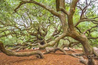 Photograph - Save The Angel Oak Tree by Dale Powell
