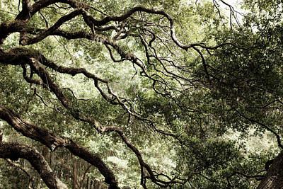 Photograph - Angel Tree by Kim Thompson