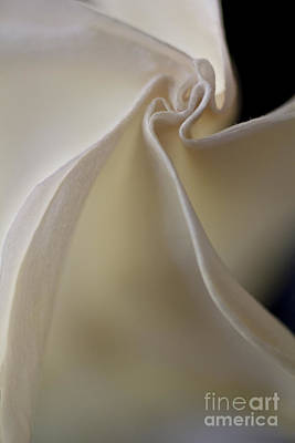 Angel Trumpet Photograph - Angel Trumpet by Elena Nosyreva