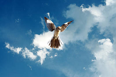 Mockingbird Digital Art - Angelic Mockingbird by Roy Williams