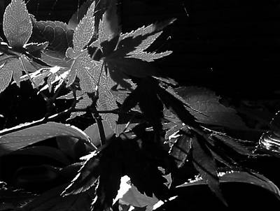 Bright Appearance Photograph - Angels Or Dragons B/w by Martin Howard