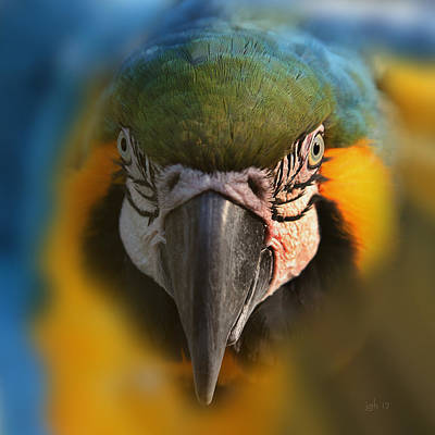 Photograph - Angry Bird 2 by Joseph G Holland