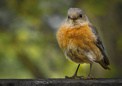 Angry Birds Photograph - Angry Bird by Jean Noren