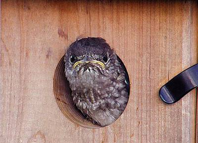 Wall Art - Photograph - Angry Bird by Shannon Story