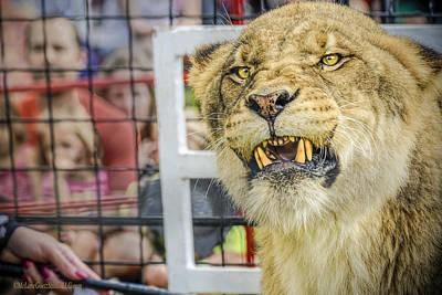 Angry Photograph - Angry Circus Lion by LeeAnn McLaneGoetz McLaneGoetzStudioLLCcom