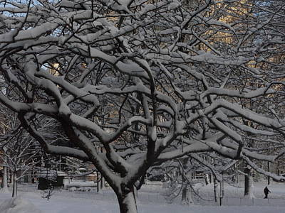 Angular Tree With Snow Art Print