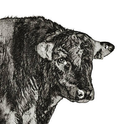 Angus Bull - High Key Art Print by Bill Kesler