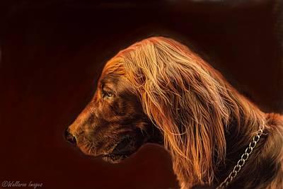 Digital Art - Angus Irish Red Setter by Wallaroo Images