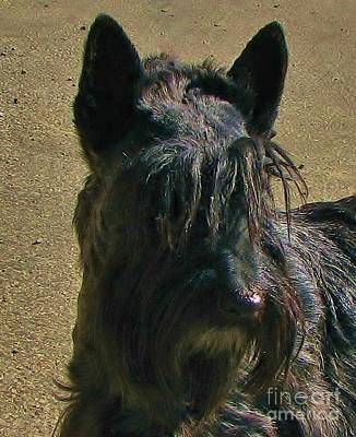 Photograph - Angus Up Close by Michele Penner