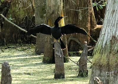 Anhinga At Rest Art Print by Theresa Willingham