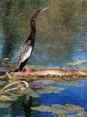 Anhinga Painting - Anhinga by Carolyn  English