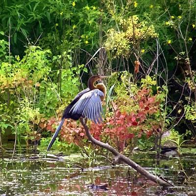 Anhinga Wall Art - Painting - Anhinga In Swamp by John Samsen