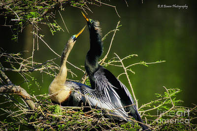 Anhinga Love Original by Barbara Bowen