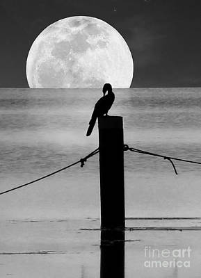 Photograph - Anhinga Moon by Deborah Smith