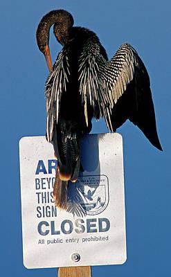 Anhinga Photograph - Anhinga Perched On A Signpost by Millard H. Sharp