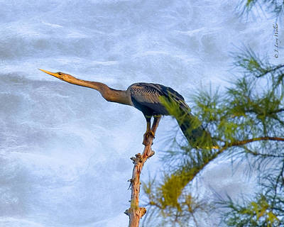 Cypress Swamp Digital Art - Anhinga Resting Atop Cypress by J Larry Walker