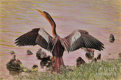Anhinga Wall Art - Painting - Anhinga Sun Bathing by Deborah Benoit