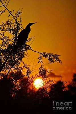 Photograph - Anhinga Sunset by Lynda Dawson-Youngclaus