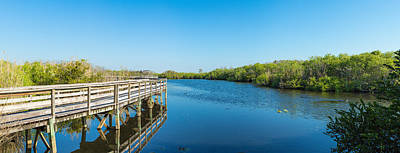 Anhinga Wall Art - Photograph - Anhinga Trail Boardwalk, Everglades by Panoramic Images