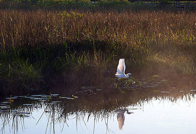 Anhinga Trail Sunrise Art Print by Bruce Bain