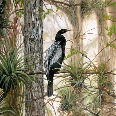 Anhinga Wall Art - Painting - Anhinga Waiting by Tim Davis