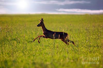 Ears Photograph - Animal Background. Roe-deer by Michal Bednarek