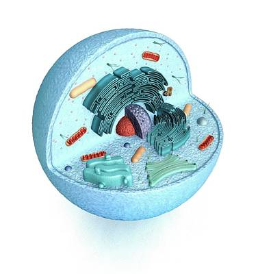 Animal Cell Art Print by Mikkel Juul Jensen