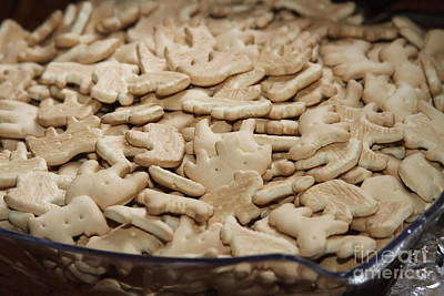 Zoo Animals Photograph - Animal Crackers by Cathy Lindsey