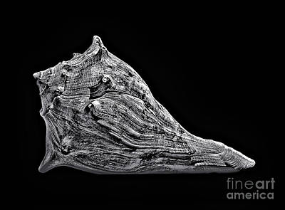 Photograph - Animal Head Sea Shell by Walt Foegelle