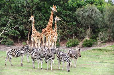 Photograph - Animal Kingdom I by Ray Warren
