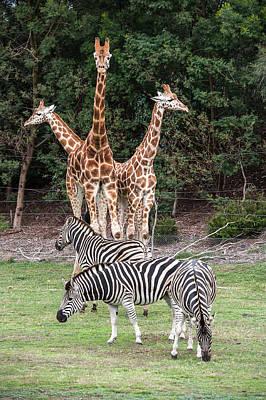 Photograph - Animal Kingdom II by Ray Warren