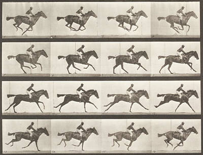 Impression Photograph - Animal Locomotion - Horse by Celestial Images